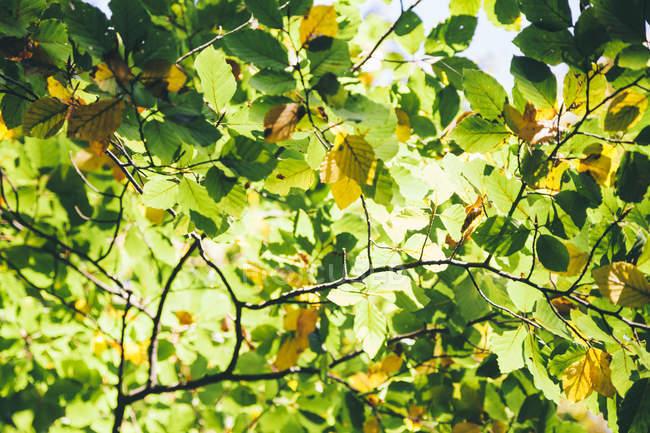 Folhas outonais em luz solar, quadro completo — Fotografia de Stock