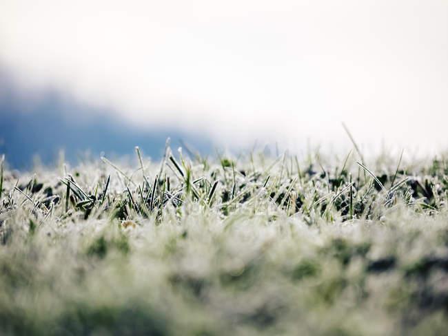 Вид замерзшей травы, размытый — стоковое фото