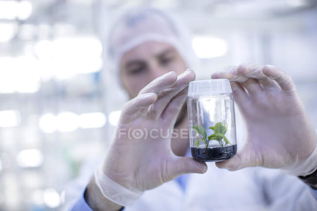 Closeup of Scientist in lab holding plant sample — Stock Photo