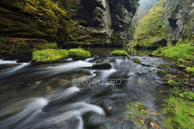 River Kamnitz  with sandstone cliffs — Stock Photo