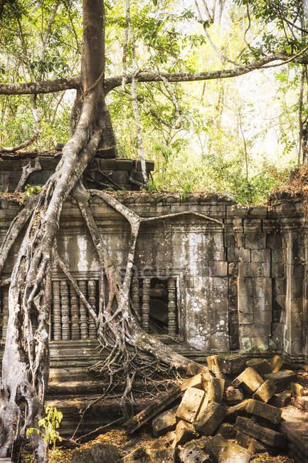 Камбоджа, Ангкор, Beng Mealea храму — стокове фото