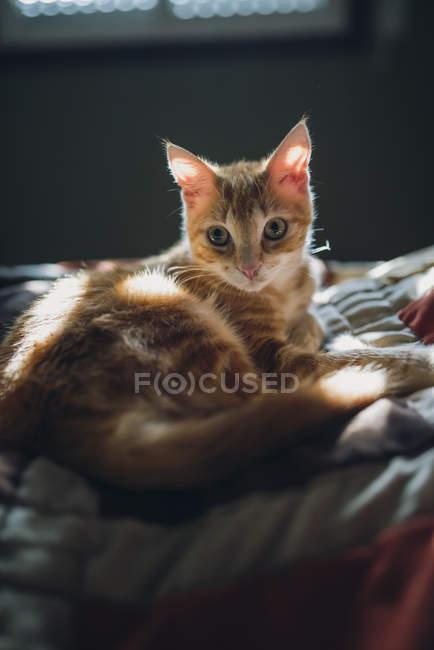 Gato de Ginger deitada na cama na luz solar — Fotografia de Stock