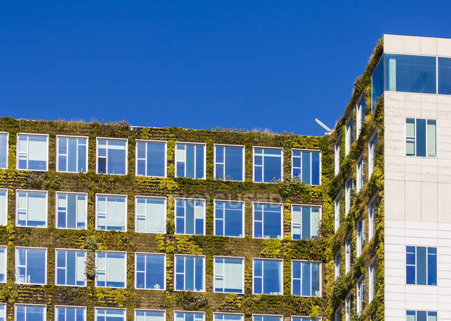 Países Bajos, Amsterdam, edificio de oficinas con vegetación de acade - foto de stock