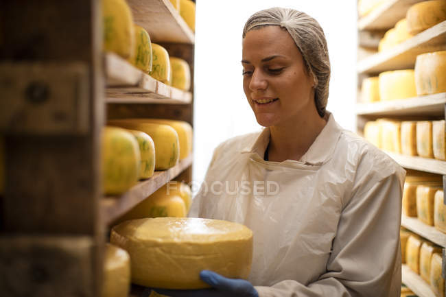 Cheese factory worker controlling maturation of cheese — Stock Photo