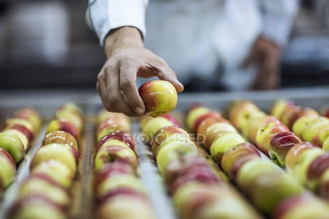Worker taking apple from conveyor belt in factory — Stock Photo