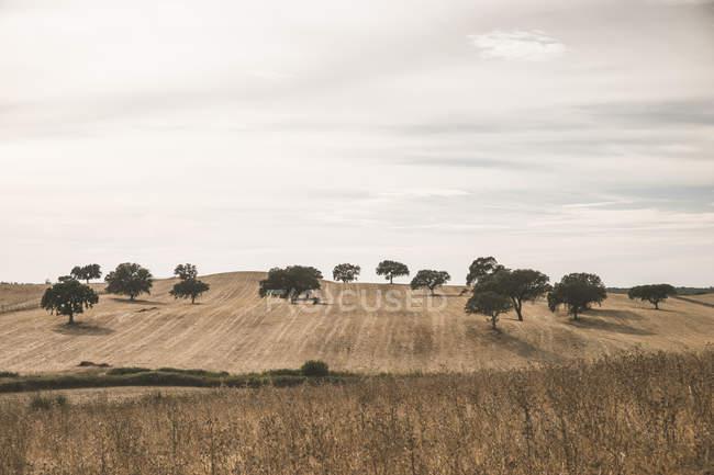 Portugal, Setúbal, Campo com árvores e céu nublado no fundo — Fotografia de Stock