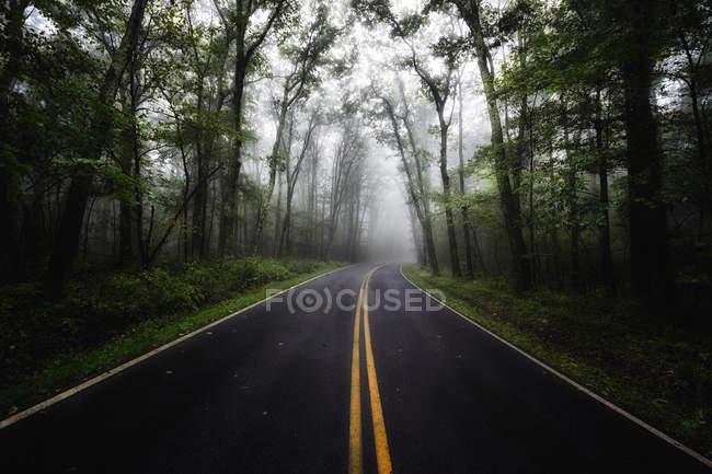 США, штат Вірджинія, порожні Blue Ridge Parkway в туман — стокове фото