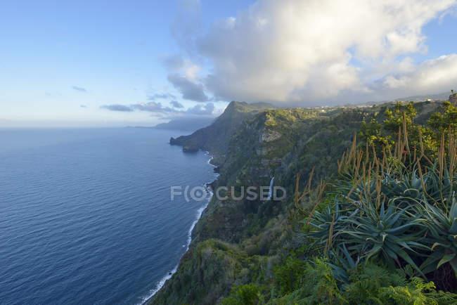 Falésias de Portugal, da Madeira, em Santana, costa norte — Fotografia de Stock