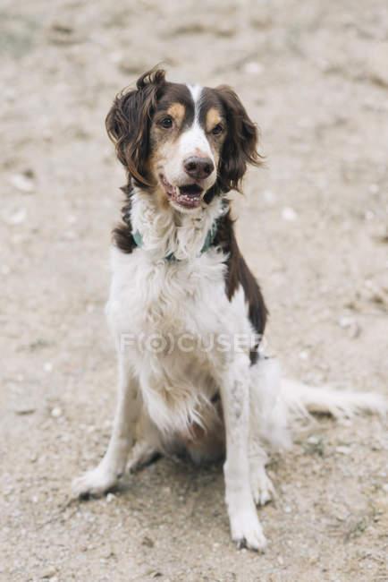 Dog sitting on ground outdoors — Stock Photo