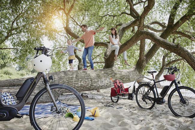 Portrait of family climbing on beach tree — Stock Photo