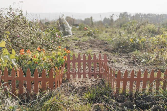 Живописный вид на коттеджный сад с забором — стоковое фото