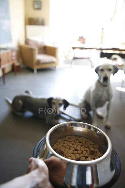Handhalteschale mit Futter für zwei Hunde zu Hause — Stockfoto