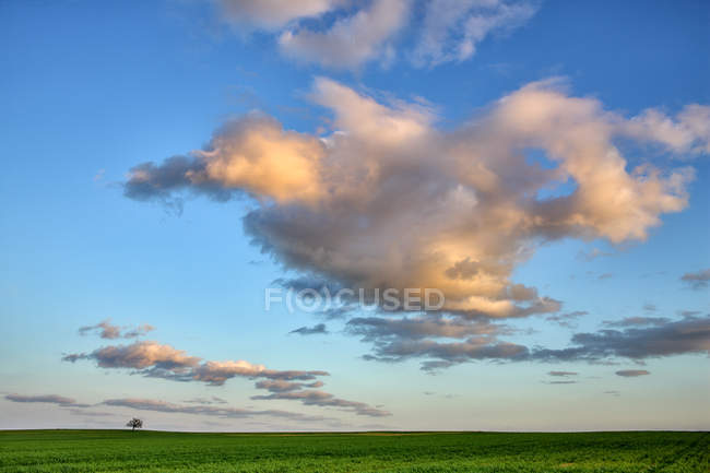 Spain, Province of Zamora, single tree in the middle of a crop field — Stock Photo
