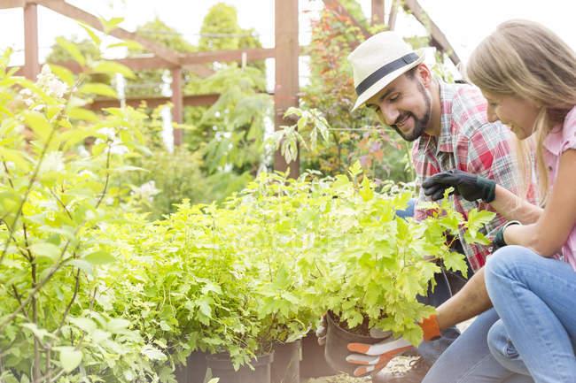 Two gardeners working in plant nursery — Stock Photo