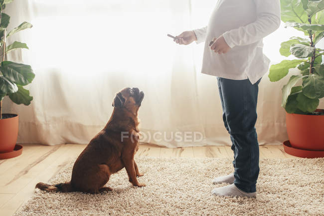 Little girl training dog at home — Stock Photo