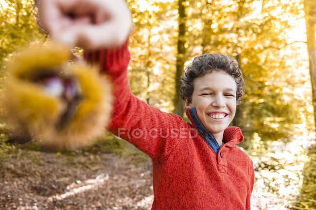 Retrato de niño sonriente con castaño dulce en bosque otoñal - foto de stock