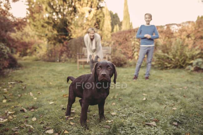 Menino e mulher com Labrador Retriever no jardim — Fotografia de Stock