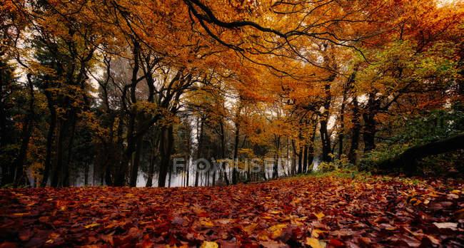 Живописный вид осеннего леса — стоковое фото