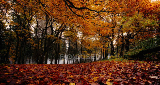 Scenic view of Autumnal forest — Stock Photo