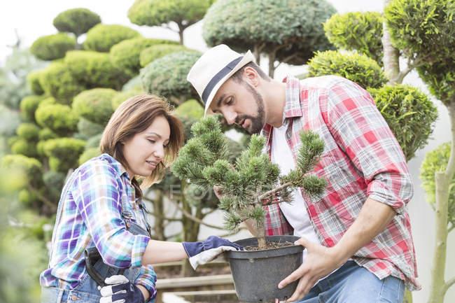 Two gardeners examining tree in a nursery — Stock Photo