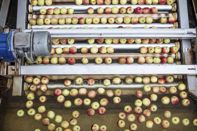 Apples in factory on conveyor belt — Stock Photo