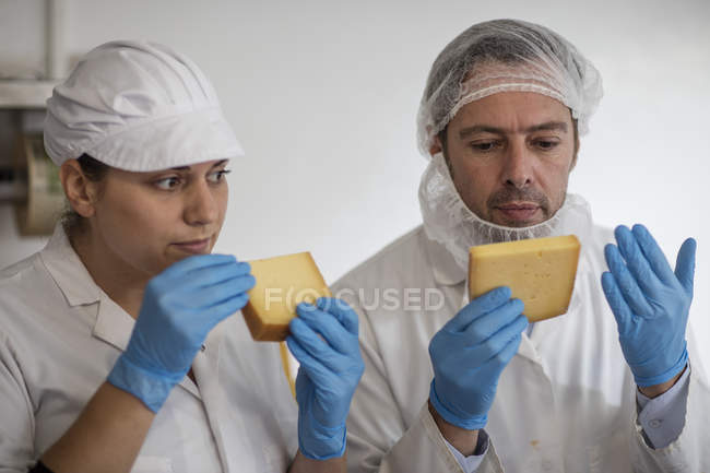 Cheese factory workers testing quality of cheese — Stock Photo