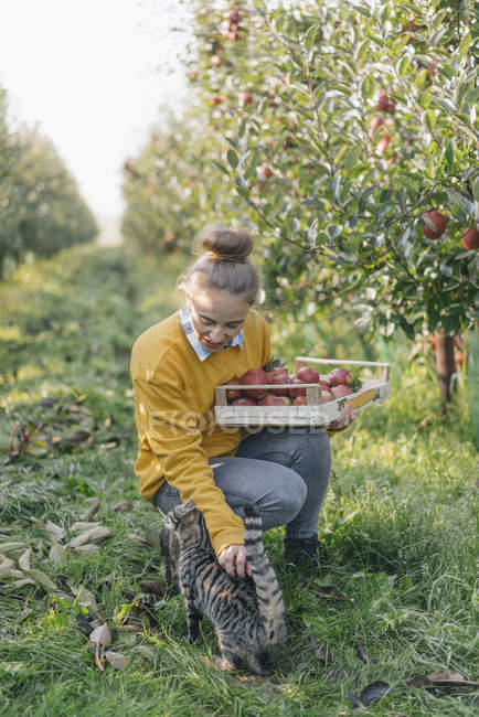 Young woman with crate and cat in apple orchard — Stock Photo