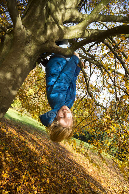 Boy climbing on tree in autumn forest — Stock Photo