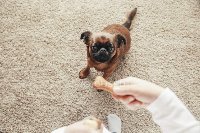 Gros plan de la petite fille chien d'entraînement à la maison — Photo de stock