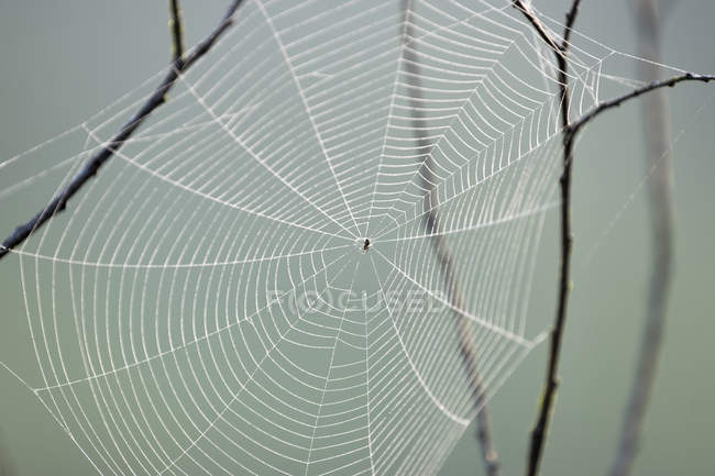 Cross spider in spider web, texture — Stock Photo