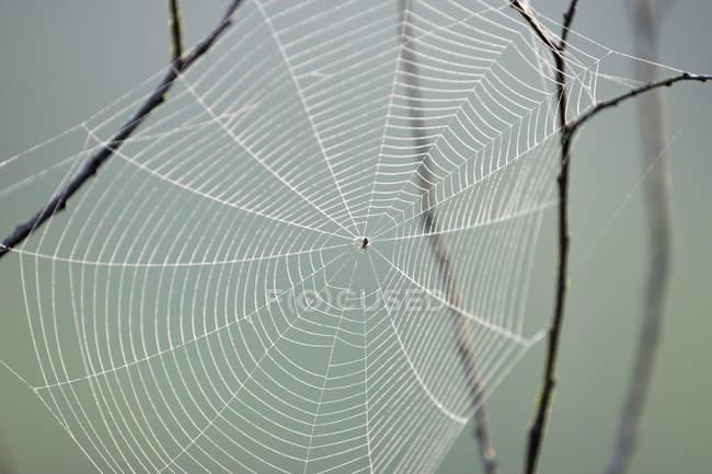 Atravessar a aranha de teia de aranha, textura — Fotografia de Stock