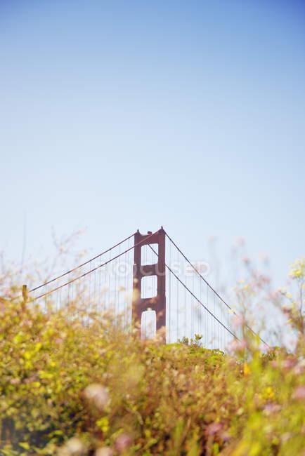 Золоті ворота міст подання, жовті польові квіти на передньому плані, Сан-Франциско, Каліфорнія, США — стокове фото