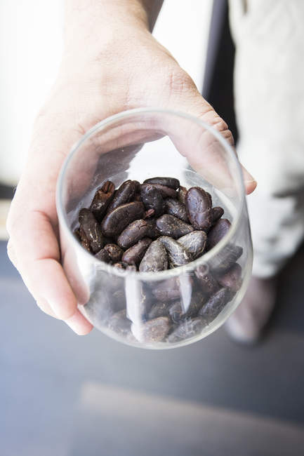 Closeup of person hand holding cocoa beans in a cup — Stock Photo