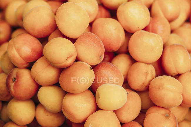 Close-up of fresh ripe apricots in heap — Stock Photo