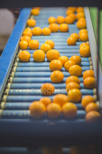 Апельсины на ленточный конвейер — стоковое фото