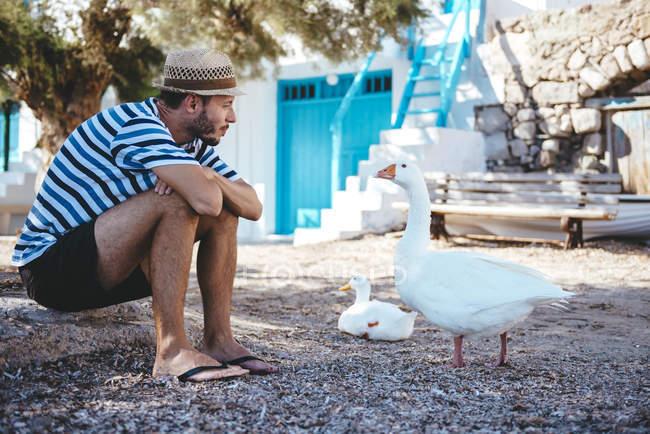 Греция, Милош, Клима, Человек сидит на земле и смотрит на гусей — стоковое фото