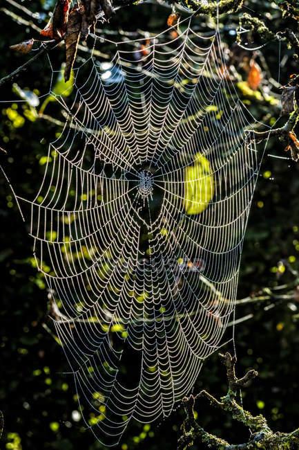 Teia de aranha na luz da manhã — Fotografia de Stock