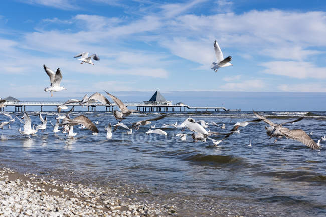 Allemagne, Usedom, Heringsdorf, mouettes à quai sur la côte — Photo de stock