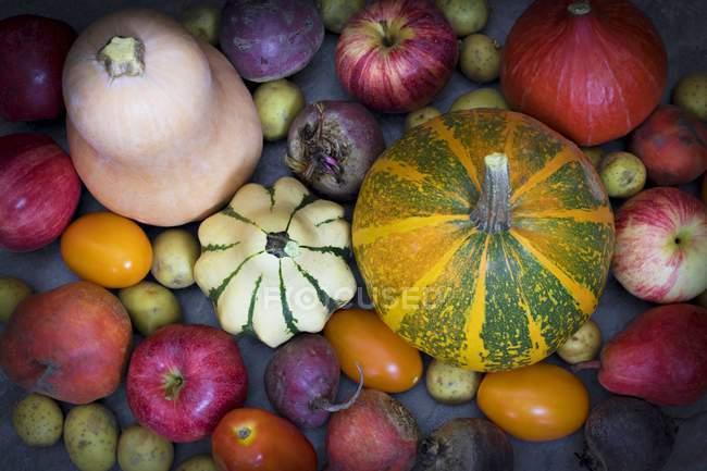Vista superiore di zucche variopinte e verdura su superficie scura — Foto stock