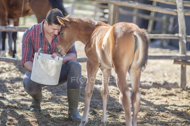 Молода людина, годування лоша на кінна ферма — стокове фото