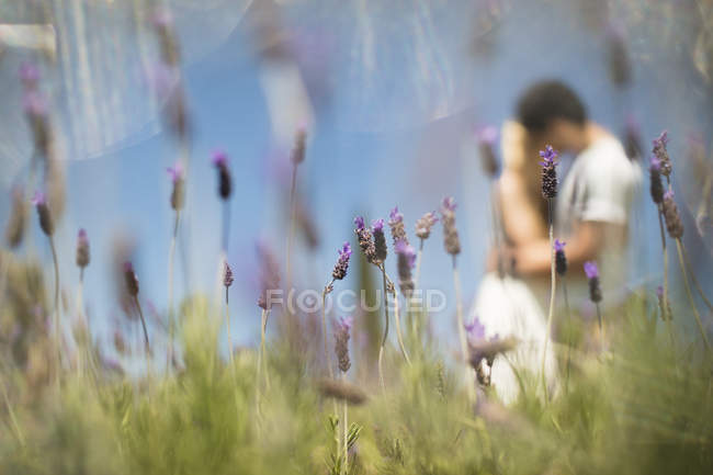 Pareja romántica besos en el campo de lavanda - foto de stock