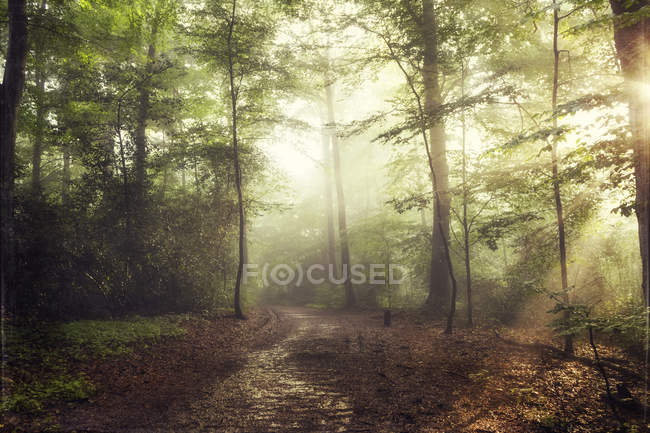 Forest in spring against the sun — Stock Photo