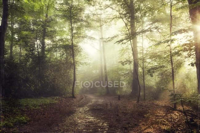 Forêt au printemps contre le soleil — Photo de stock