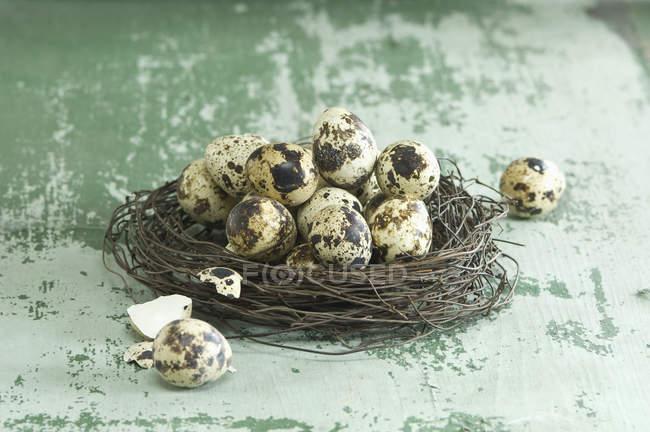Великдень гніздо перепелиних яєць — стокове фото