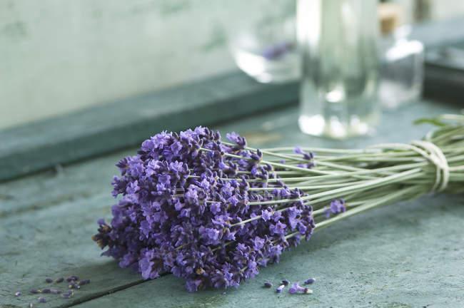 Bund frischer Lavendel — Stockfoto