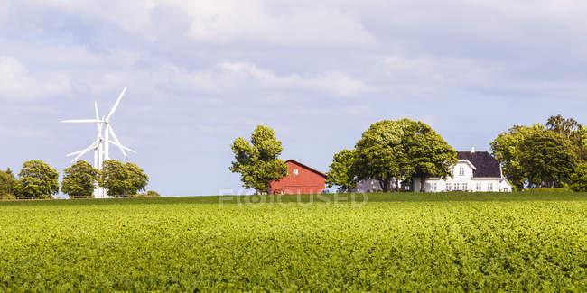 Denmark, Mon Island, field, wind park, barn and residential house — Stock Photo