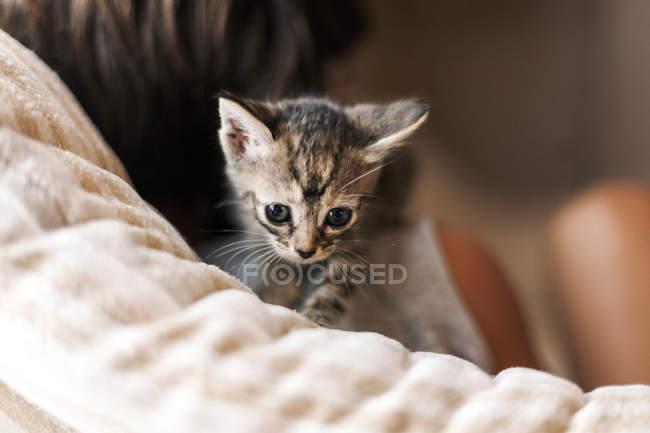 Bambino con gattino tabby — Foto stock
