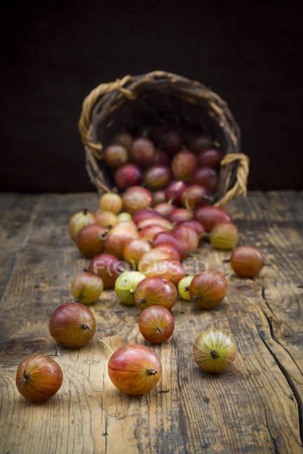 Uva spina di rosso e cestino di vimini — Foto stock