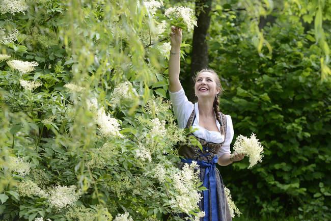 Германия, Бавария, улыбающаяся женщина в грязной одежде, собирающая бузины — стоковое фото