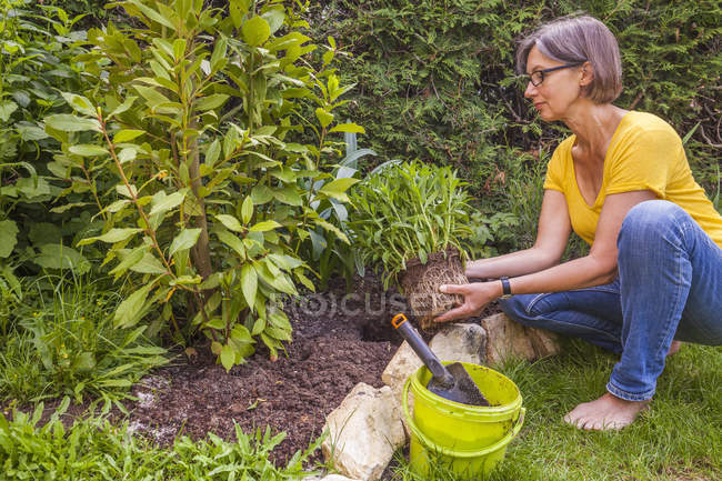 Woman planting marguerite in garden — Stock Photo